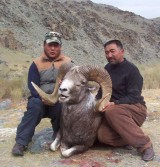 Argali sheep - Mongolia.jpg